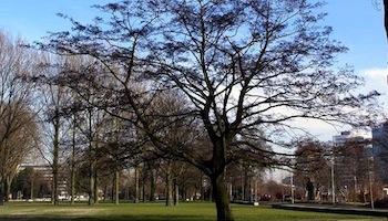 Martin Luther Kingpark – Amsterdam