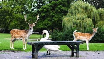 Julianapark – Utrecht