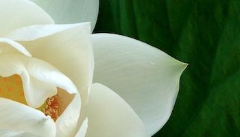 Ademtherapie & Yoga Meditatie praktijk – Utrecht