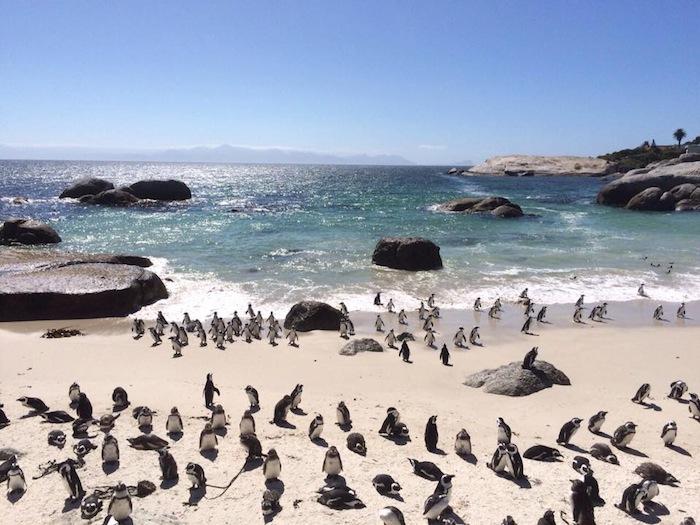 Zuid-afrika met kinderen 2