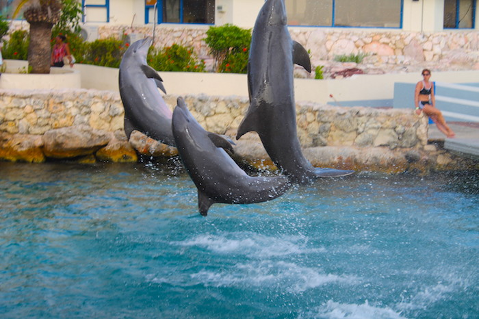 Kindvriendelijk Curacao 3