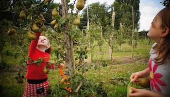 fruittuinenwest-amsterdam
