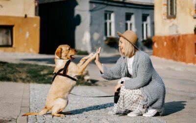 VOOR ALLE 'DOG MOMS'; DIT ZIJN ECHTE MUSTHAVES VOOR HONDEN